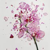 Chris Gallagher - Fragments