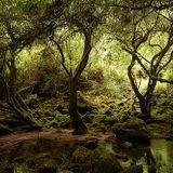 Los Pibes @ Los bosques de la juana