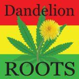 Dandelion Roots - 2013/04