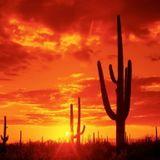 The Desert 46 TKR (18Avr2019)