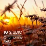IG STUDIO - Chamomile Field