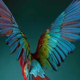 Wings of Guacamayo