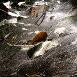 Spider Web Sunlight- A mixtape by Piper Street Sound