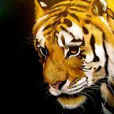Tiger Tiger Burning Bright 006: PsyChill