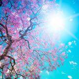 Frühlings Jahrmarkt