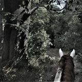 Nostalgia of the game 02