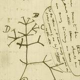 Universo en Expansión: Evolución Biológica: El Árbol de la Vida