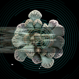 Titanopsis