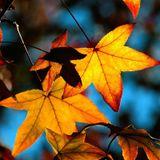 Autumn songsparte 4