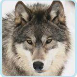DJ Wolf in da mix 3.2