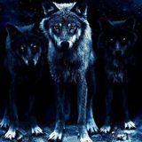 wolf says high - arda durkut