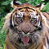 Tiger In the Night Rmix_Alan Parsons Project_ part 2 from DJ Soulfman