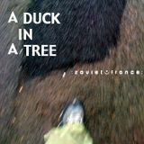 A Duck in a Tree 2012-07-14 | beta 1