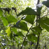 Traditional Harmony with Nature: the Waorani