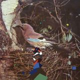 Woodland Birds: January through March