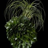 Ikebana Paper Art with Plantas de Aire