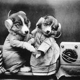 Paul McGehee's Time Machine 071517: A Dog Show