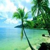 Palm-lined Seaside
