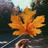 Tino Deep - Autumnal (November 2017 Promo Mix)