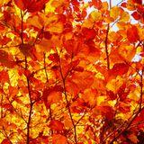 Autumn Lovin' (MMXI)