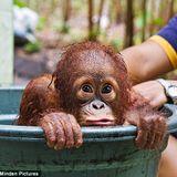 MonkeyTimeRadioHour_12-Sept-2012