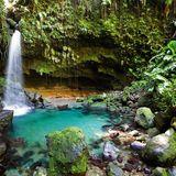 Rainforest(Sunrise Dreams Mix)