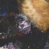 Suspiria - The Sirens (Gallery Mix)