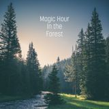 Magic Hour in the Forest