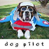 DOG PILOT - Bermuda Triangle (MP3 Way)