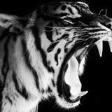 Tigerstyle