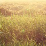 Fields vol. 01 by Christian Storm
