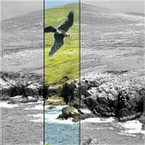 Tiefenrausch #051: The Peregrine
