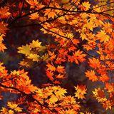 Autumn Sighs (2009) by Blutch Watson