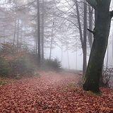 Techno Transistor: Teutoburg Forest