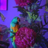 [PLAYLIST] Mercredi ! La Sieste d'Anna Fehèr // 28.09.2016