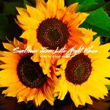 Sunflower Jazz: Late Night Vibes