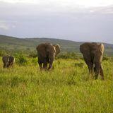 Moerkes - Raum Safari