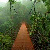Vintage Jungle
