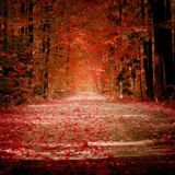 Sinous - november 2012 podcast