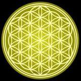 Dona - Strange frequencies 88