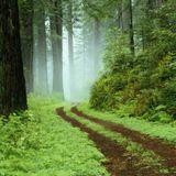 Deep Focus - Deep Forest Mix
