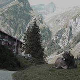 waktu loopa - cool cats alpine camper coffee
