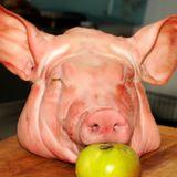 Episode 4 - Pig Heads & Cereal
