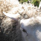 Farm to Table Talk - Theresa Ryan