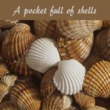 A pocket full of shells