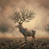 Ecoweb Radio / October 2012 / David Armada & Yann Rauss