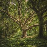 Hermetech's Happy Hour 02 - Psych Folk (Seeing The Forest For The Trees)