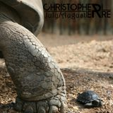 Christopher Erre - July / August Podcast 2014