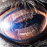 GUS VAN SOUND - Moog (2015-08-19)