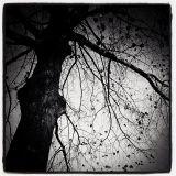 mR_BLACk - Last Leaves